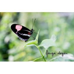Fjäril på en kvist