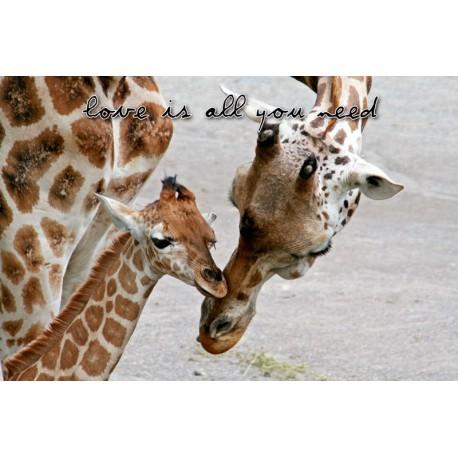 Kärleksfull giraffmamma