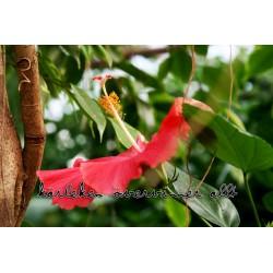 Exotisk blomma