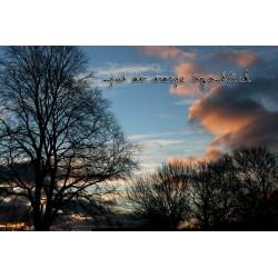 Träd mot himmel